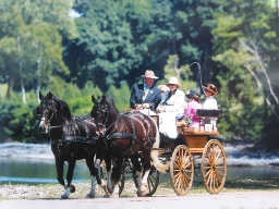 Cavendish Carriage Ride