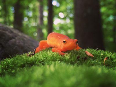 Sally The Salamander